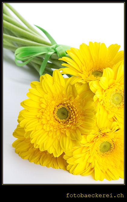 Tag 107 Projekt 365 gelbe Gerbera