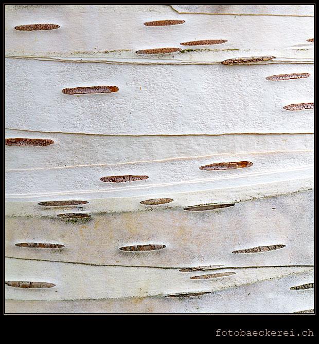 Muster der Natur Baumstamm Makro
