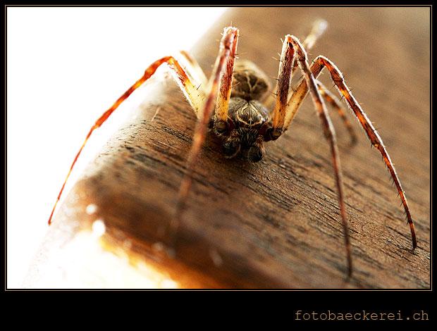 Tag 219 Projekt 365 Spinne