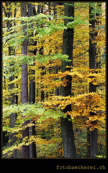 Tag 276 Projekt 365 Wald Herbstfarben Baeume