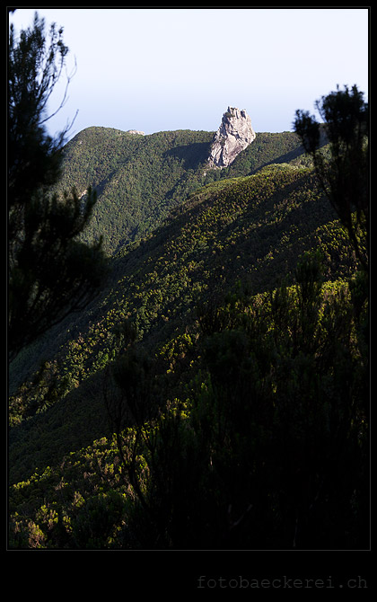 Roque de Anambro, Anaga Regenwald, Teneriffa